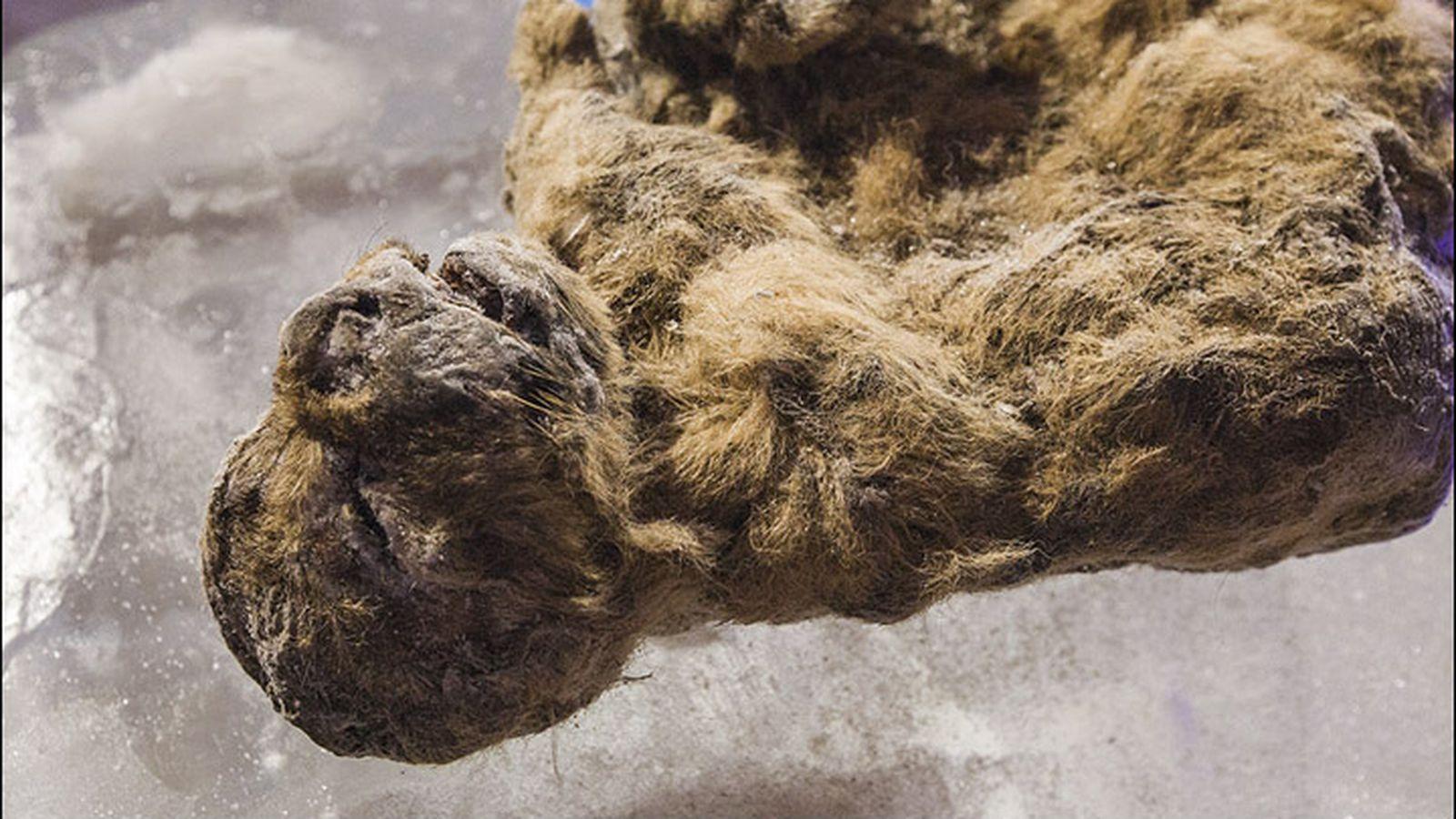 Extinct animals found frozen