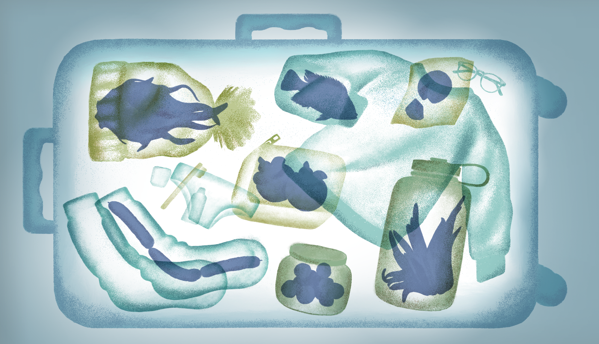 An illustration showing a suitcase as it would look to an airport x-ray machine, with fish, vegetables, and sausage links hidden inside clothing and other items.