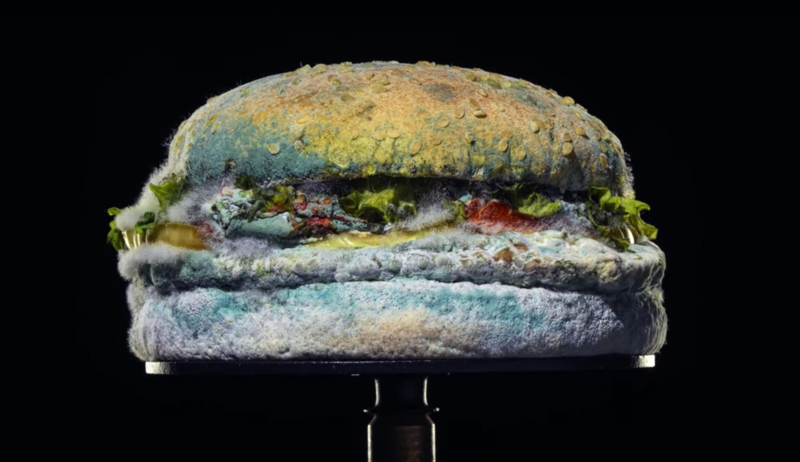 A moldy Burger King Whopper sandwich.