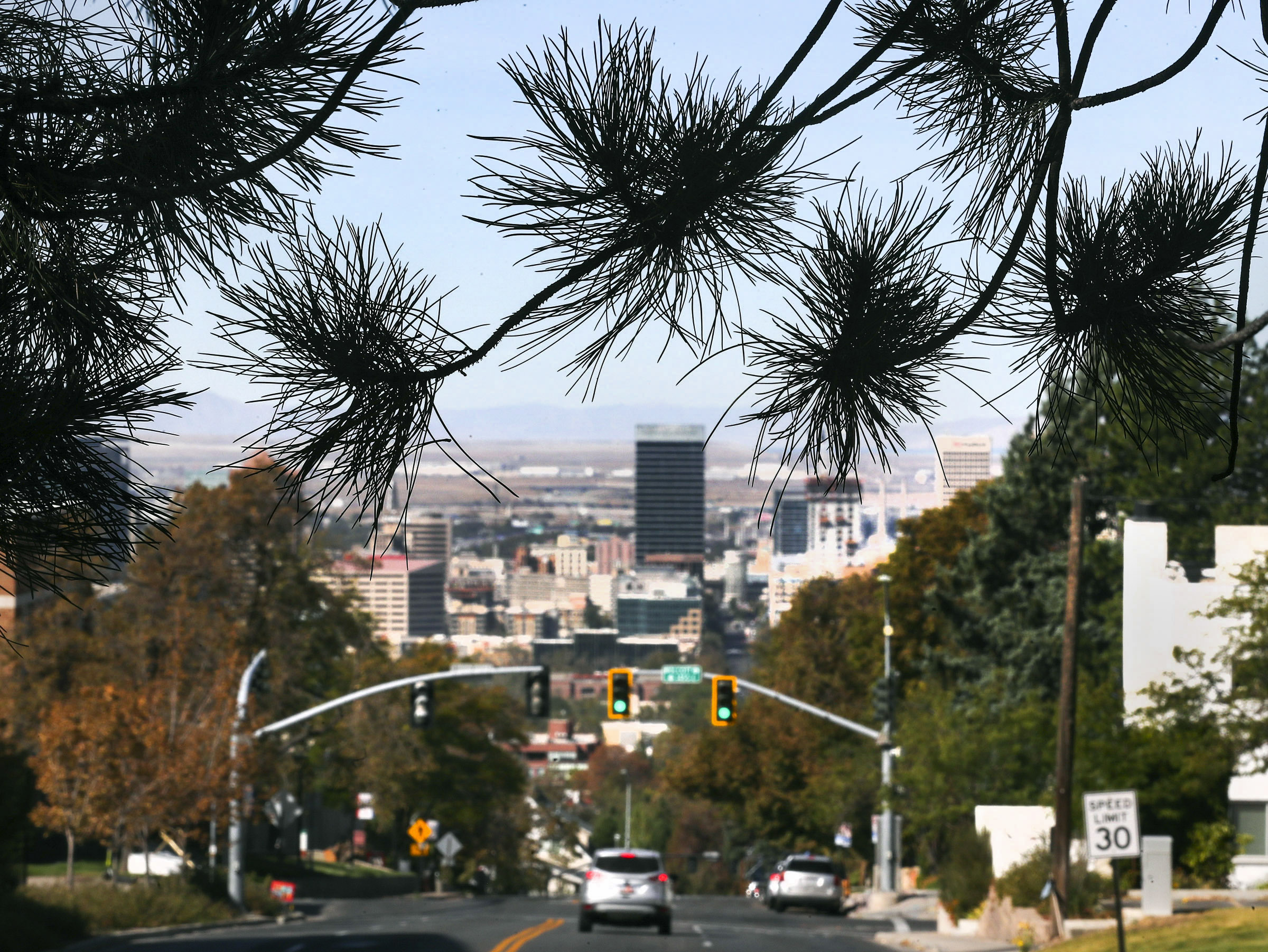 Branches of Austrian pine trees on North Campus Drive on the University of Utah campus frame the Salt Lake City skyline on Monday, Sept. 28, 2020. A new U. study looks at air pollution by slicing through pine tree needles. The team selected four Austrian pine trees on North Campus Drive and collected pine needles twice in 2017 after a summer of relatively good air and again in December during some of that winter's worst air quality.