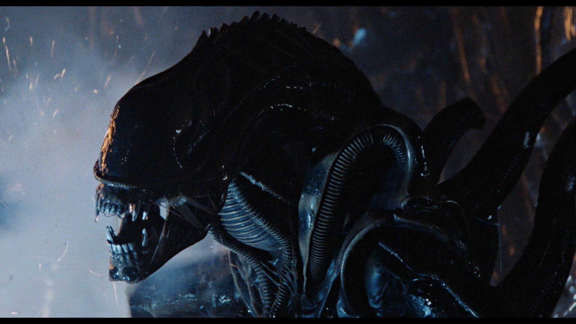 A xenomorph from Alien