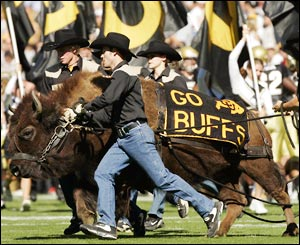 Could Ralphie be soon roaming the sidelines during Mountain West Conference games?  (Brian Bahr/Getty Images)