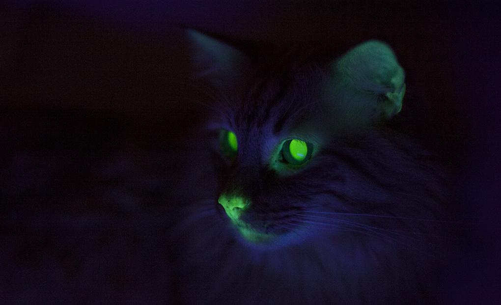 detours_cats