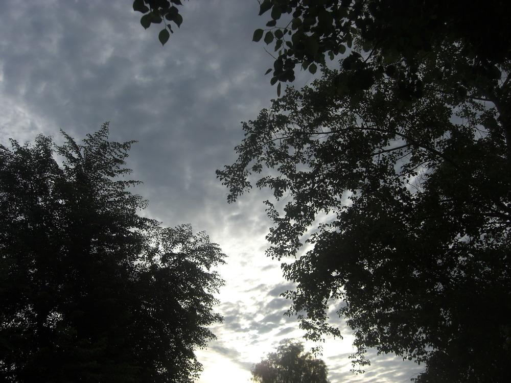 Sunrise through Trees. (Carl Putnam)