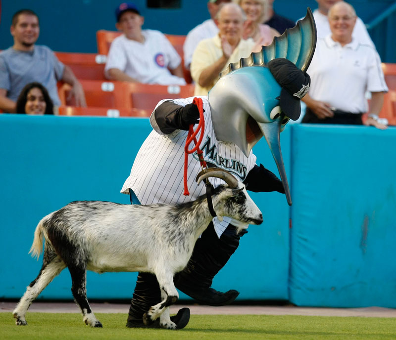 2009 - Cubs manager Lou Piniella was not amused when the Marlins paraded a goat onto the field in front of the Cubs' dugout.
