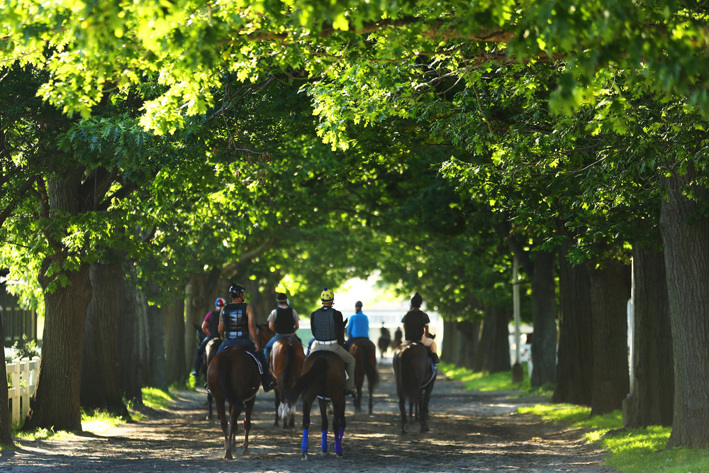 ELMONT, NY - JUNE 01:  Horses go to the track and back to their barns during a morning workout at Belmont Park on June 1, 2012 in Elmont, New York.  (Photo by Al Bello/Getty Images)