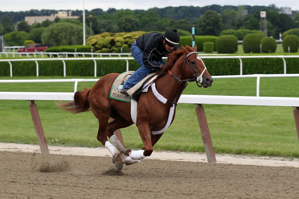 June 4, 2012; Elmont, NY, USA;  I'll Have Have Another ridden by exercise rider Jonny Garcia on the track during a morning workout prior to the 144th running of Belmont Stakes at Belmont Park. Mandatory Credit: Anthony Gruppuso-US PRESSWIRE
