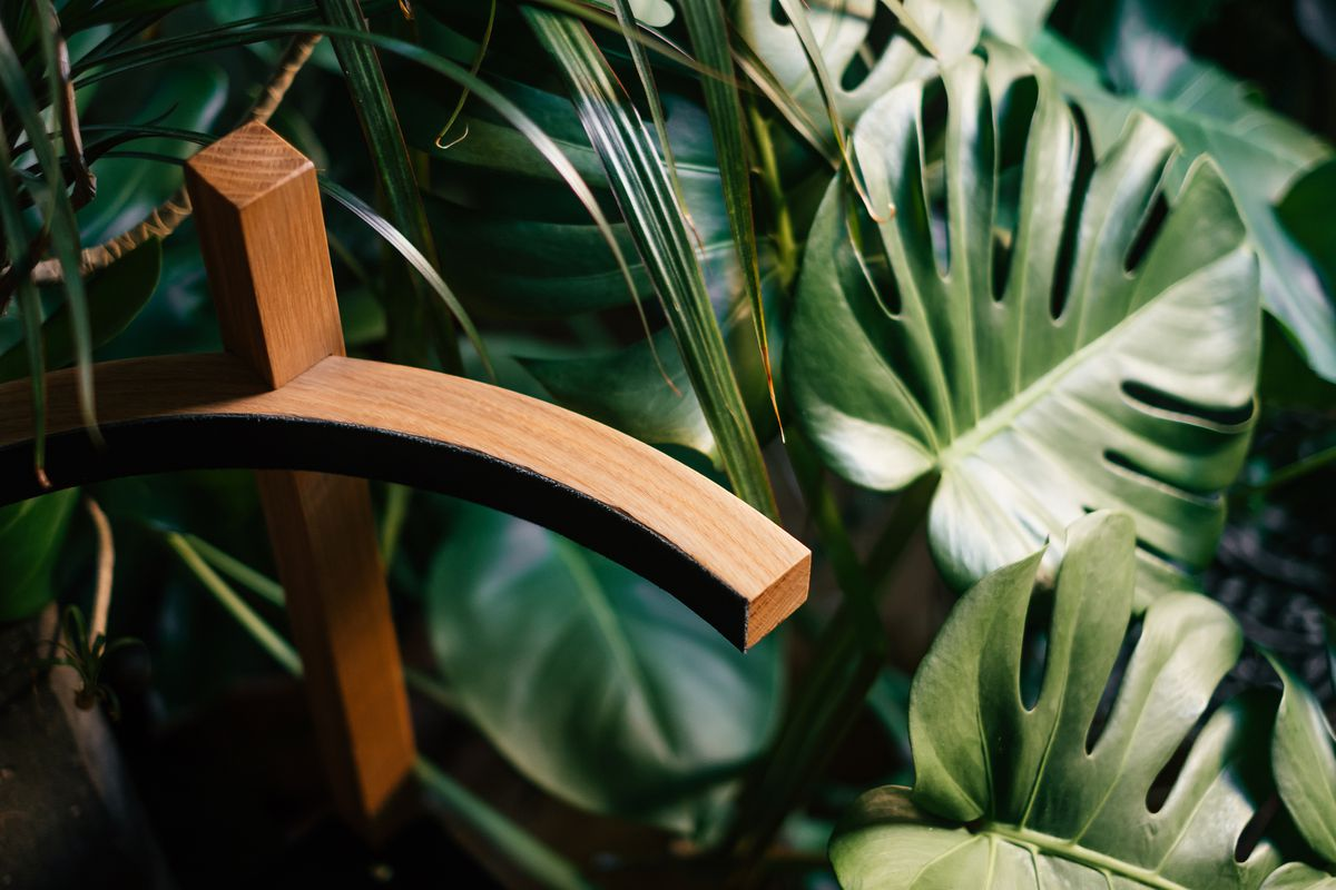 A wooden chair arm emerges from the green leaves that surround it.