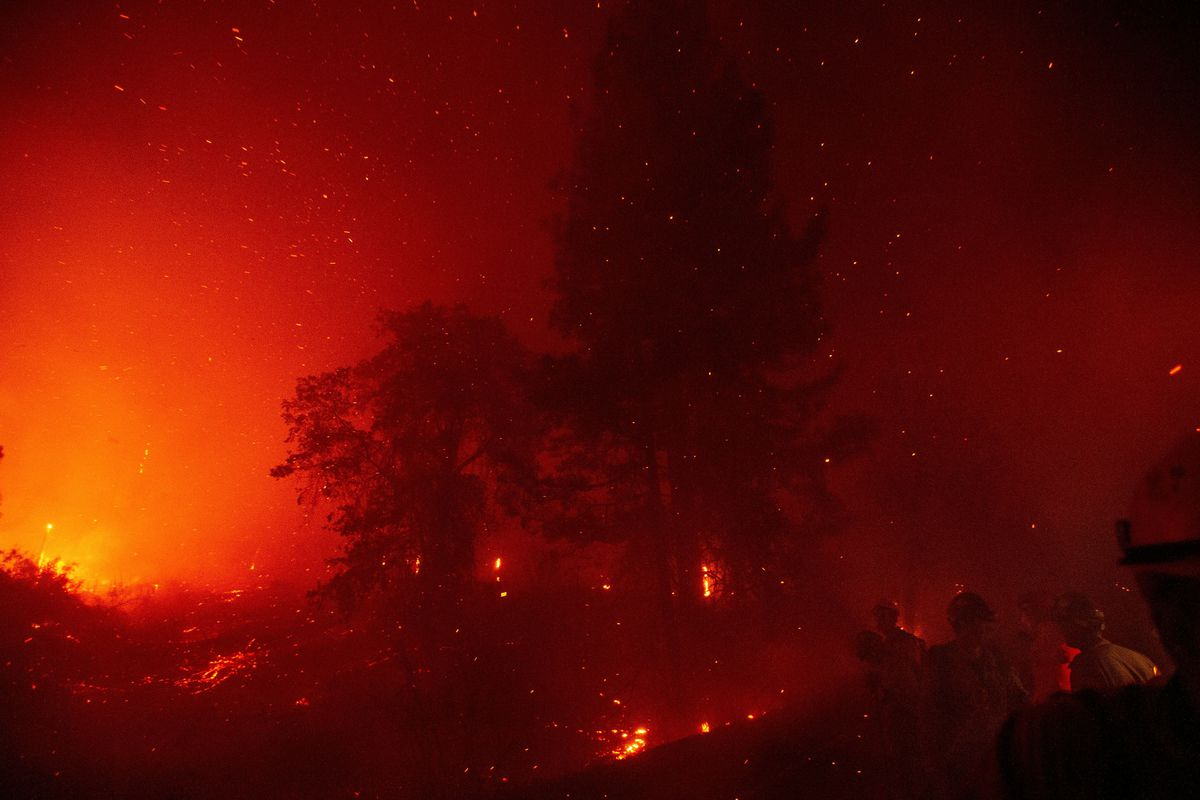 Bright red and orange flames illuminate the smoke and trunks of trees in a forest fire.