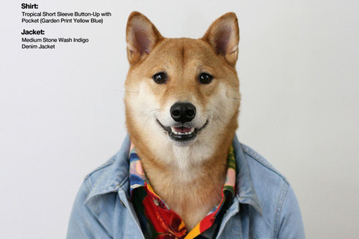 "Image via <a href=""http://mensweardog.tumblr.com/post/55127217297/american-apparel-x-menswear-dog-american-apparel"">Menswear Dog</a>"