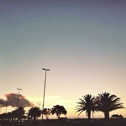 """""""Palm tree lined sunsets in the area I live in called Sea Point."""""""