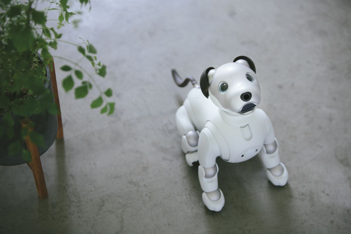 Robotic puppy with puppy dog eyes