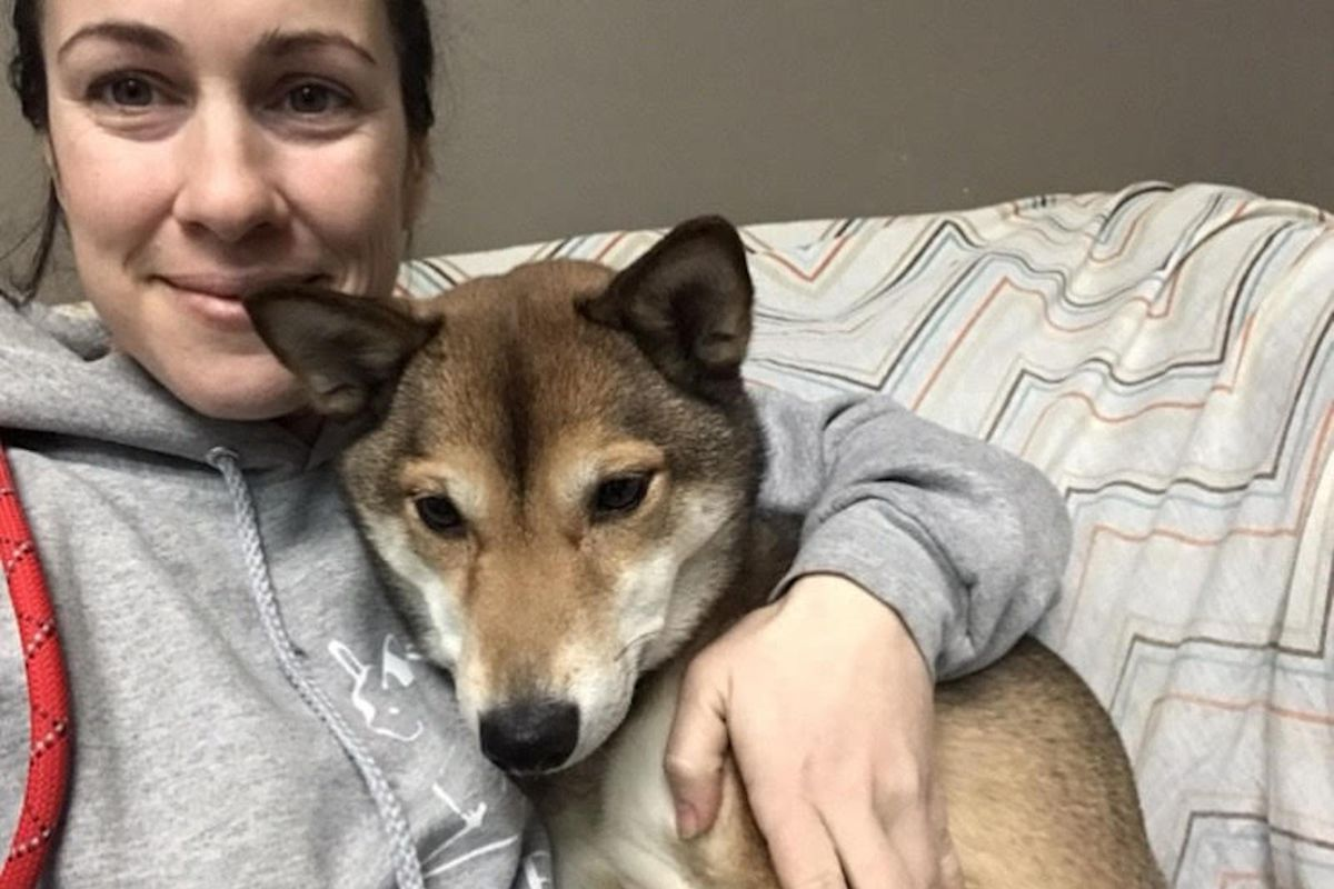 Danielle Daidone, owner and trainer at Four Paws in Lombard, has seen business plummet because of the coronavirus. With people working from home or laid off, there's less need for dog-sitting. Here she is with a Shiba Inu, Gilly.