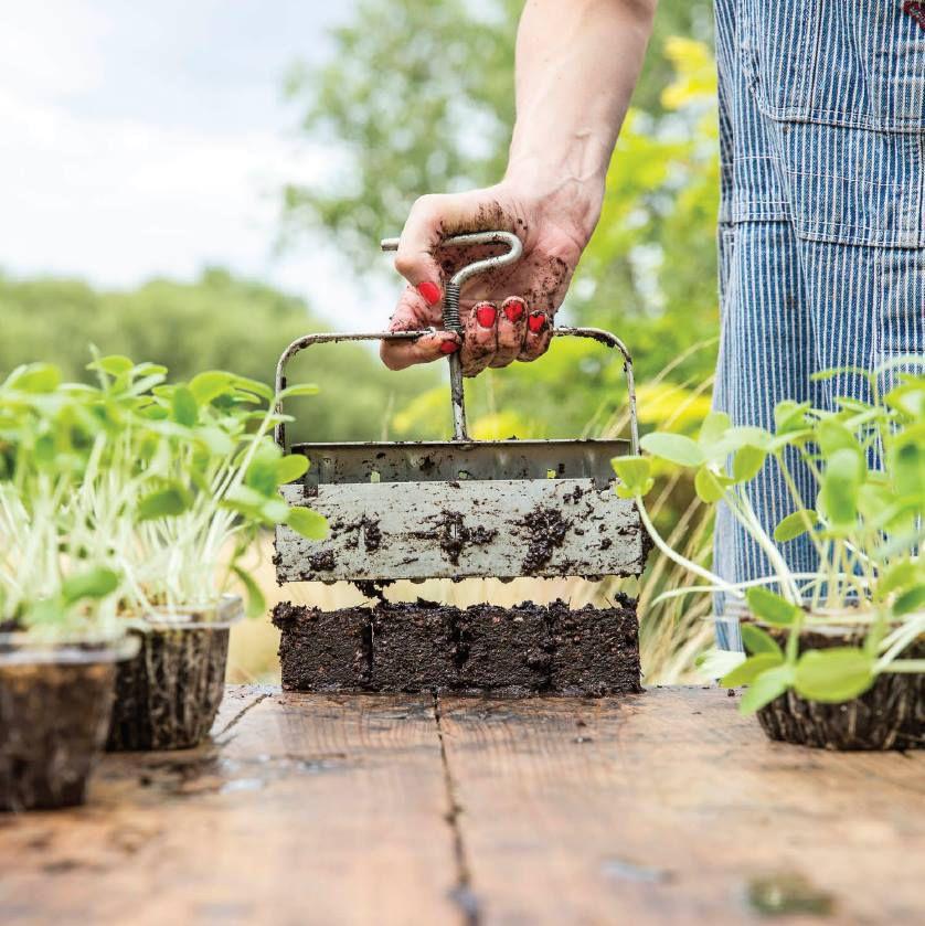 "Soil blocker and seedlings. [Photo: <a href=""https://www.facebook.com/vinnyATX/photos/pb.1553778951579325.-2207520000.1460999575./1584729175150969/?type=3&theater"">Vinaigrette/Facebook</a>]"