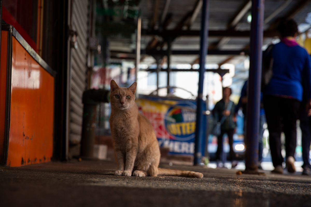 A cat on the Lower East Side.