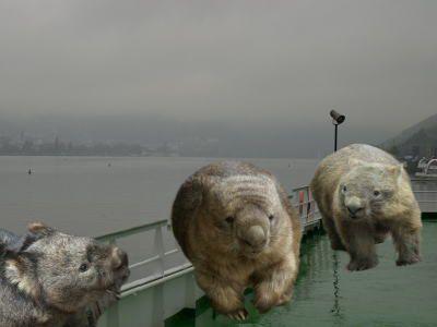 Wombats in Germany