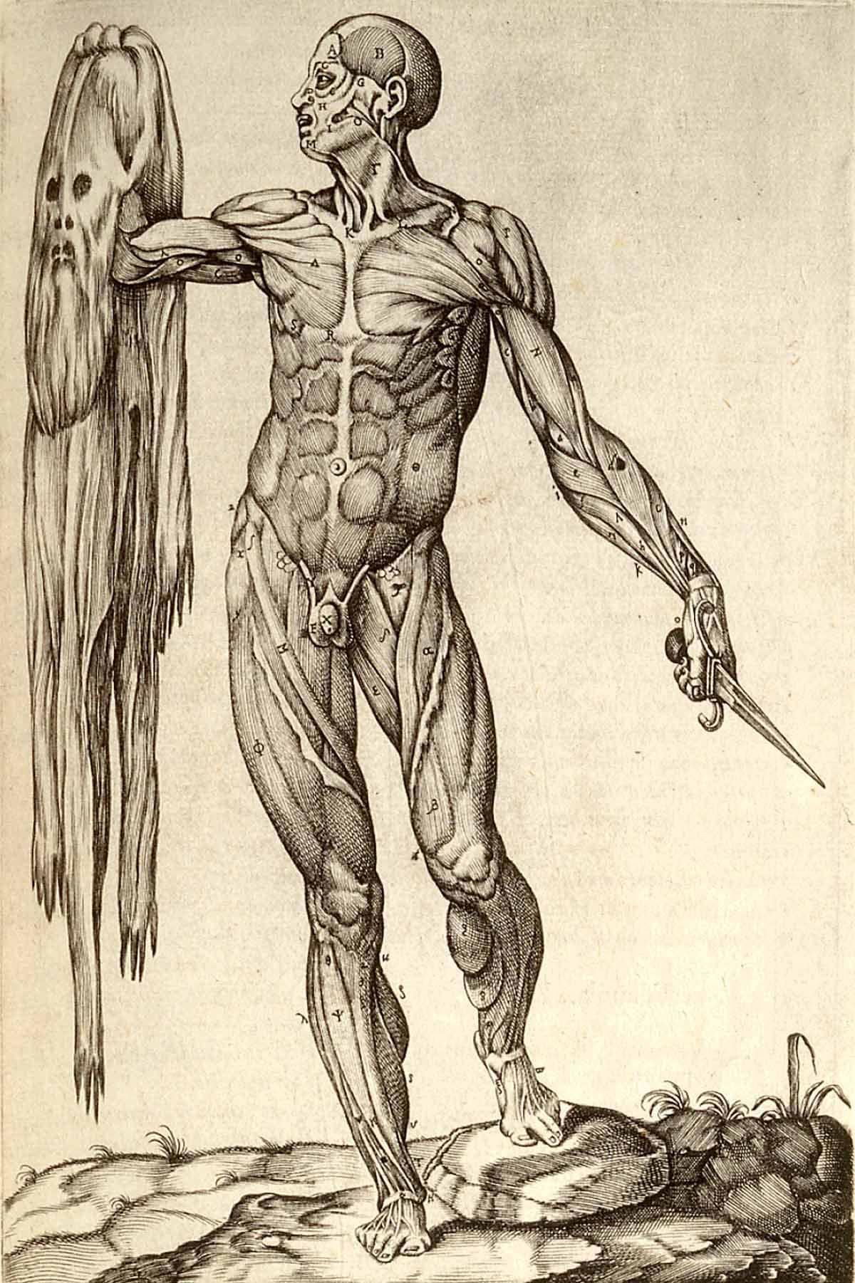 Fantástico Anatomía Ortopédica Rederos Composición - Imágenes de ...