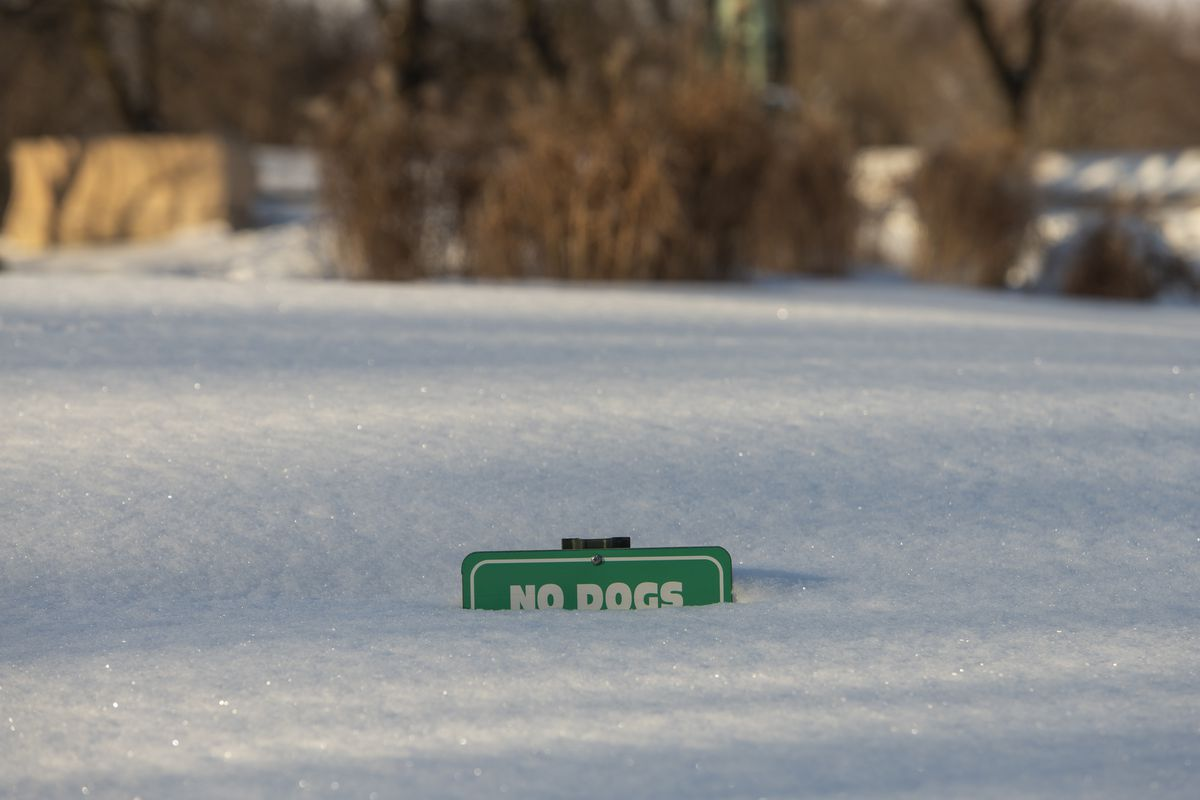 """A """"No Dogs"""" sign is buried under snow in Lincoln Park, Thursday, Feb. 18, 2021."""