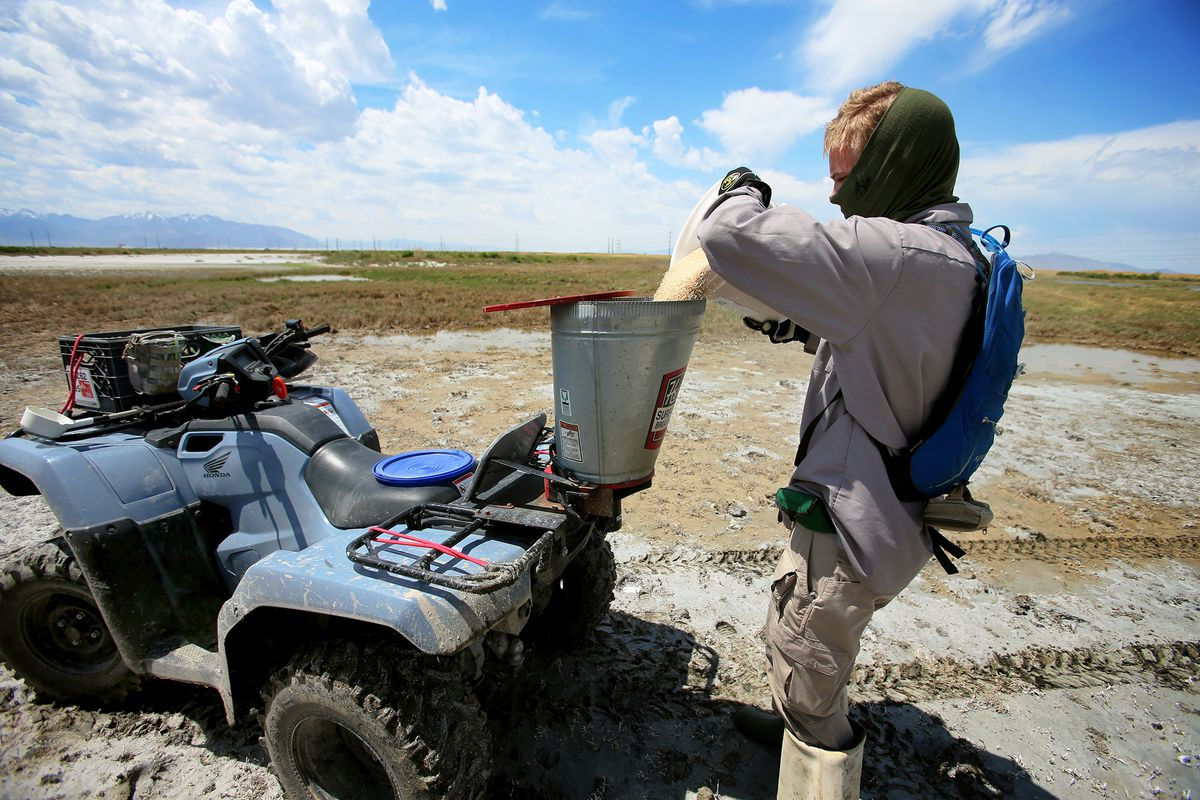Seth Summerhays, a vector control technician with the Salt Lake City Mosquito Abatement District, fills a hopper with larvicide at the Rudy Duck Club in North Salt Lake on Monday, May 11, 2020.