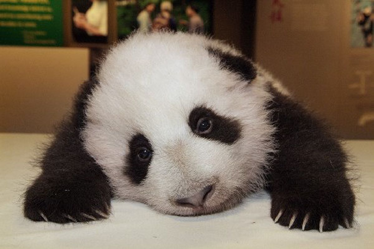 It's alright panda, I thought they were going to pull it off too. Next year, okay?