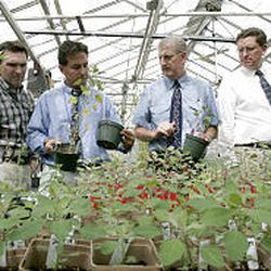 BYU researchers Jeff Maughan, left, Rick Jellen, Mikel Stevens and Craig Coleman check quinoa seedlings in greenhouse. Jellen says the team's goal is to see the rural Bolivians grow more productive quinoa.