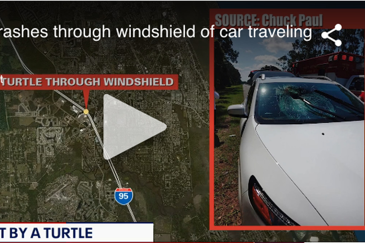 The turtle that came flying through a windshield on Interstate 95 near Daytona Beach, Florida, is believed to have been on the roadway when another The turtle that came flying through a windshield on Interstate 95 near Daytona Beach, Florida, is believed to have been on the roadway when another vehicle hit it, knocking it into the air.vehicle hit it, knocking it into the air.