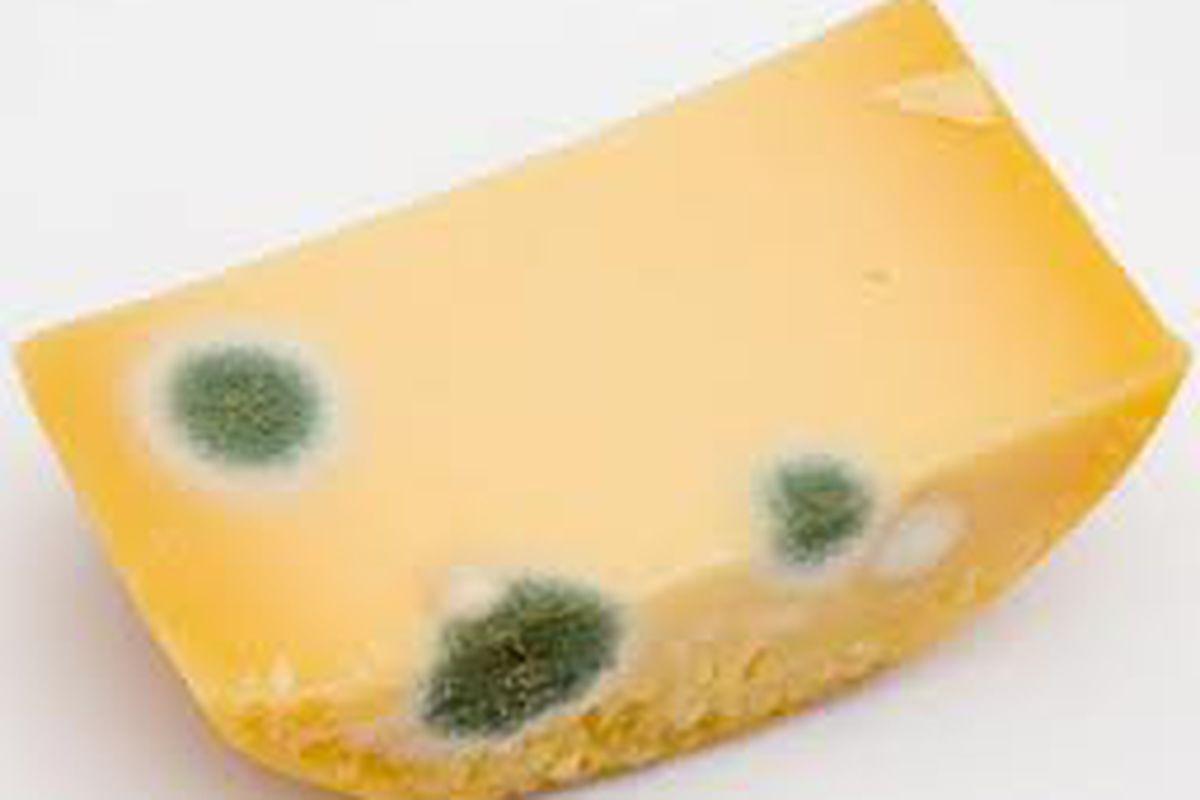Bad Cheese.