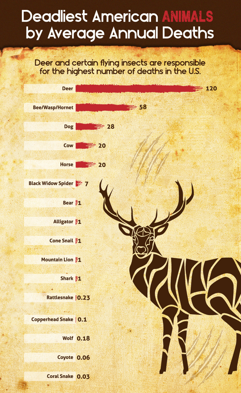 You Are Way More Likely To Be Killed By Deer Than By
