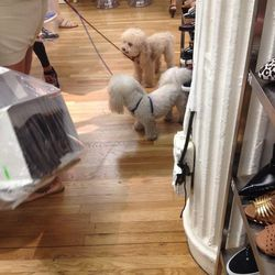 And we leave you with shopping puppies.