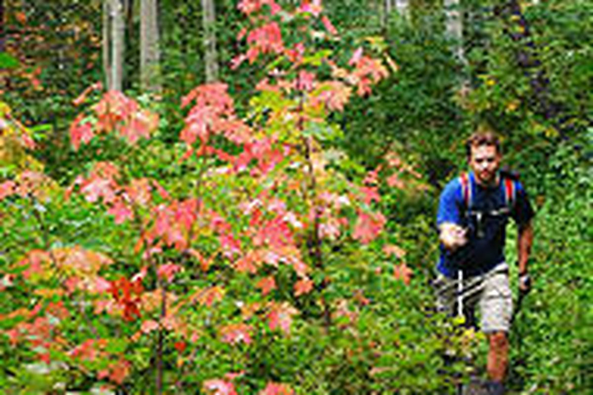 Landon Florence of West Jordan sees some of fall's first color on a trail in Big Cottonwood Canyon.