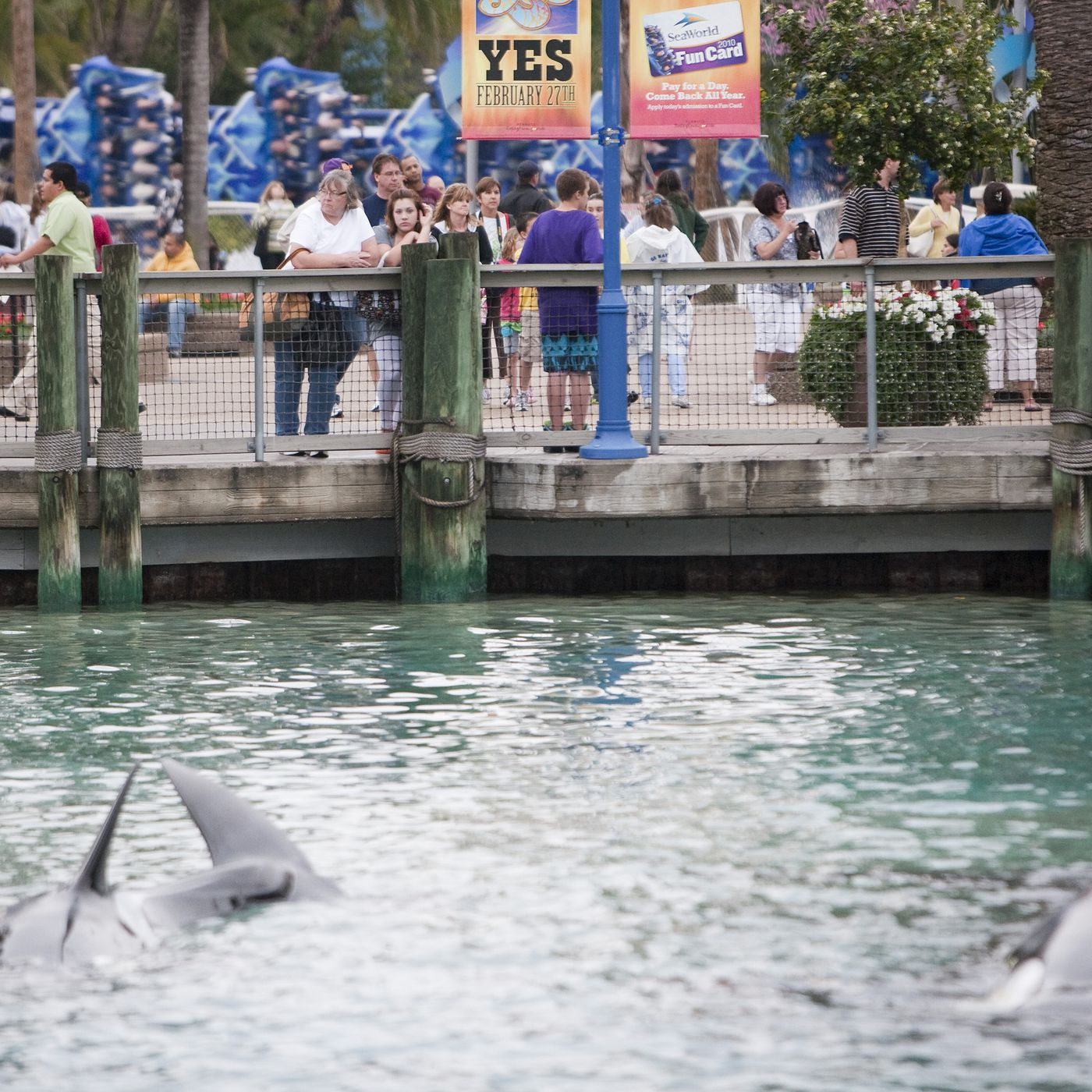 Blackfish won: SeaWorld will stop holding killer whales