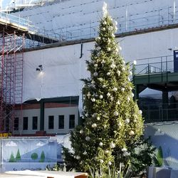 Cubs holiday tree being set up