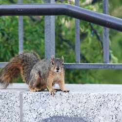 A squirrel scampers near the Conference Center during the Sunday morning session of the 191st General Conference of The Church of Jesus Christ of Latter-day Saints in Salt Lake City on Sunday, Oct. 3, 2021.