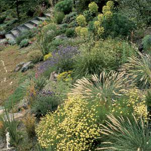 <p>Ornamental grasses make a bold statement in your yard and are very easy to grow. They come in a wide variety of sizes, colors and textures.</p>