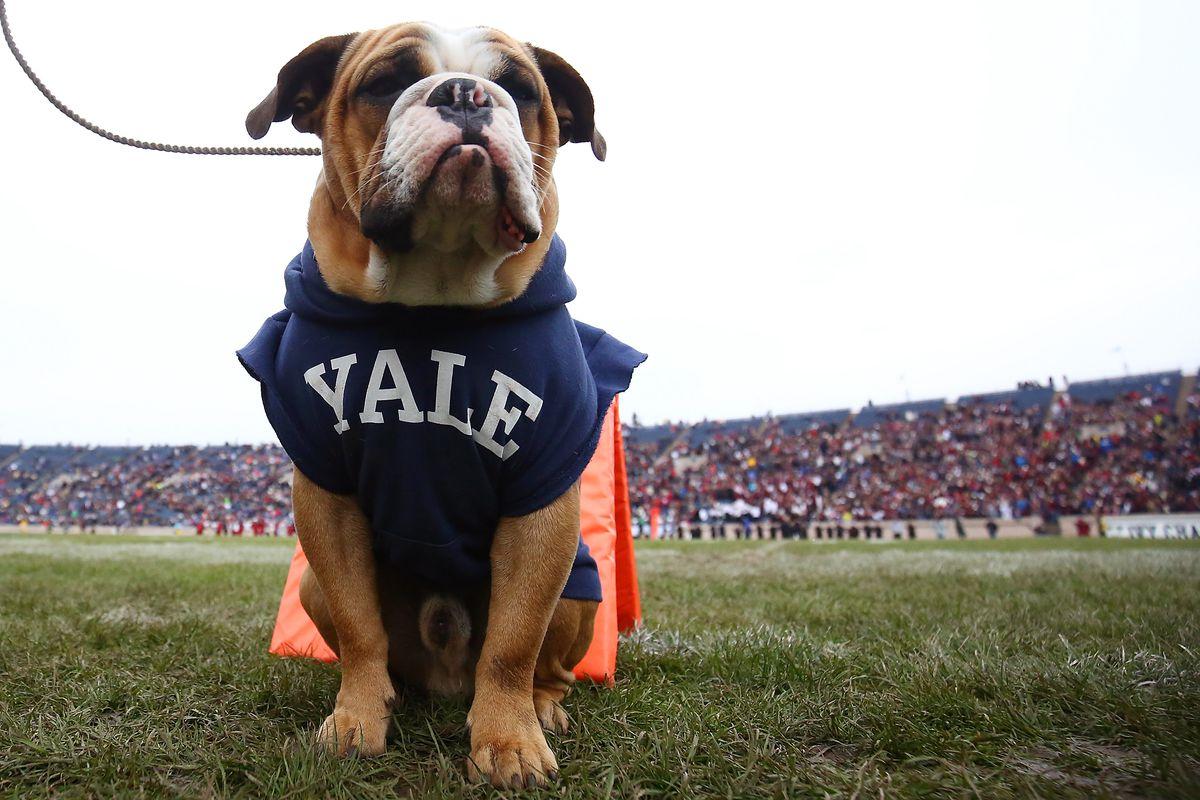Harvard v Yale