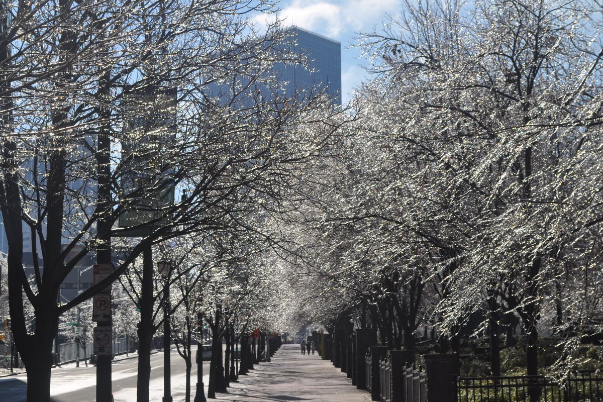 Frost covers rows of trees on either side of the sidewalk next to Centennial Olympic Park.