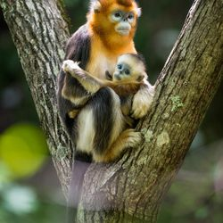 """Join Disneynature on a remarkable journey to see the beauty of China and experience the epic stories of animal families set against a vast canvas in """"Born in China."""""""