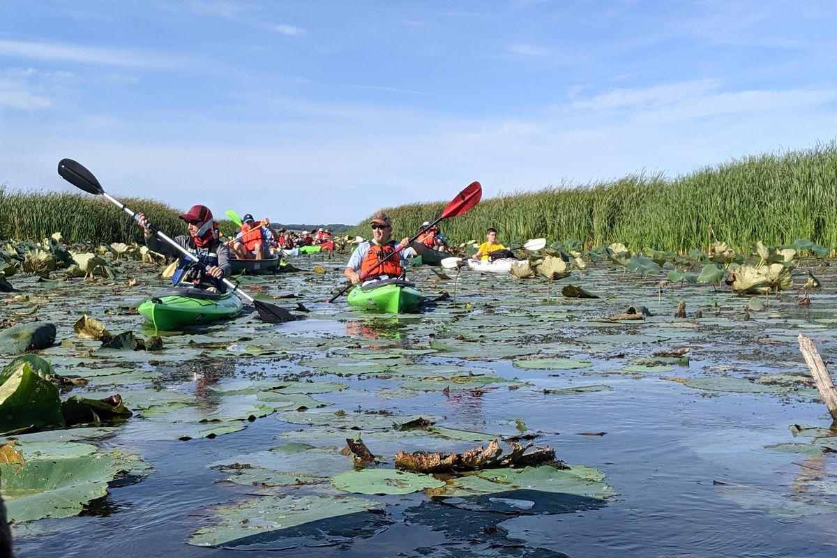 Paddling the Preserve allows a check-in at Emiquon Preserve and update the audacious project along the Illino…