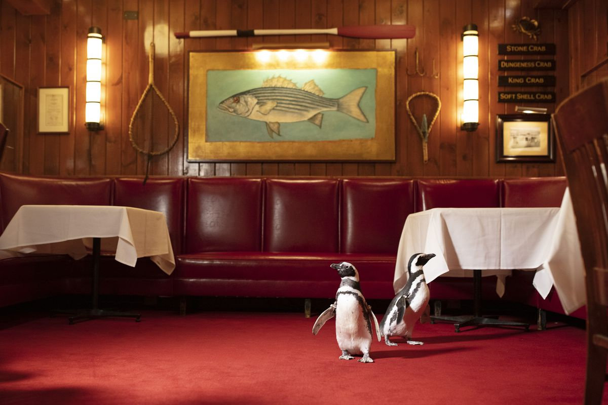 Two small penguins stand inside a restaurant space