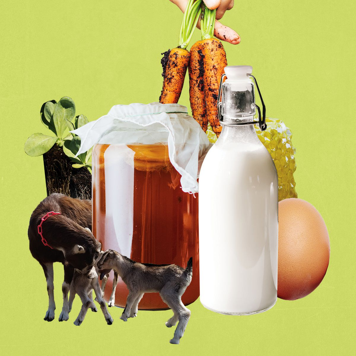 Photo collage of two goats, a bottle of milk, jar of honey, egg, and carrots.