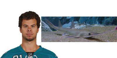 Tyler Kennedy Shark