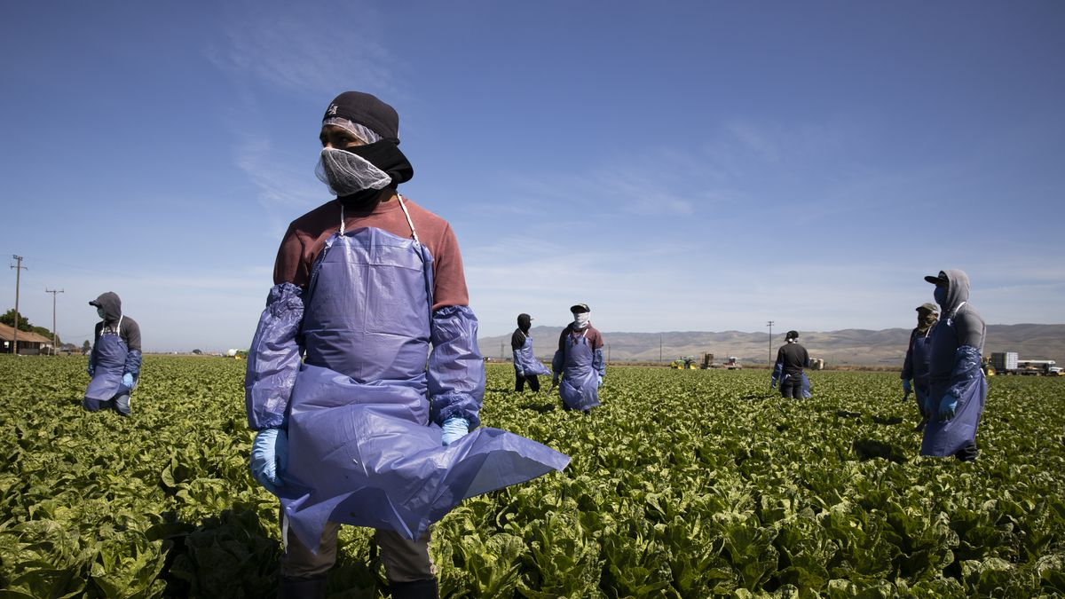 Six people wearing masks, gloves, and protective aprons stand several feet apart in a field.