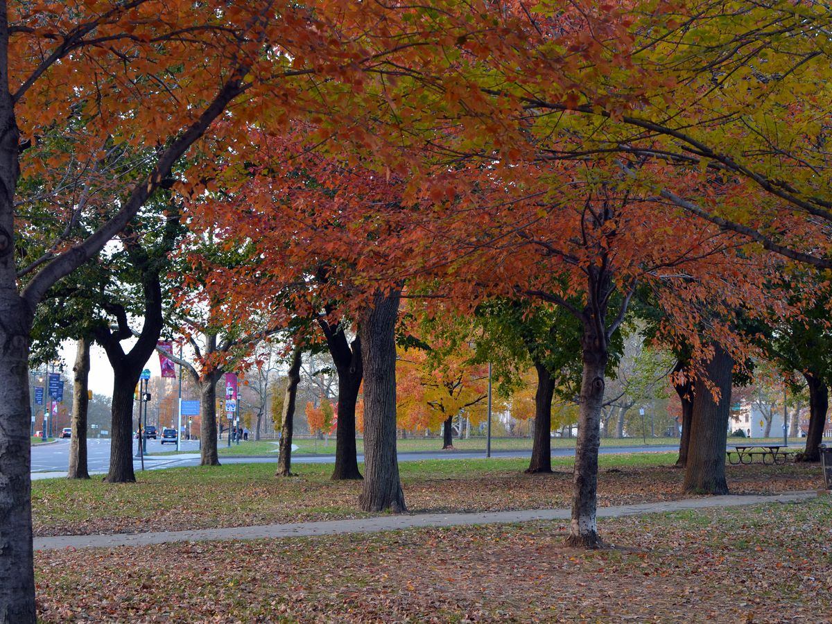 The Benjamin Franklin Parkway in Philadelphia. There is a walking path surrounded by trees with colorful autumn leaves.