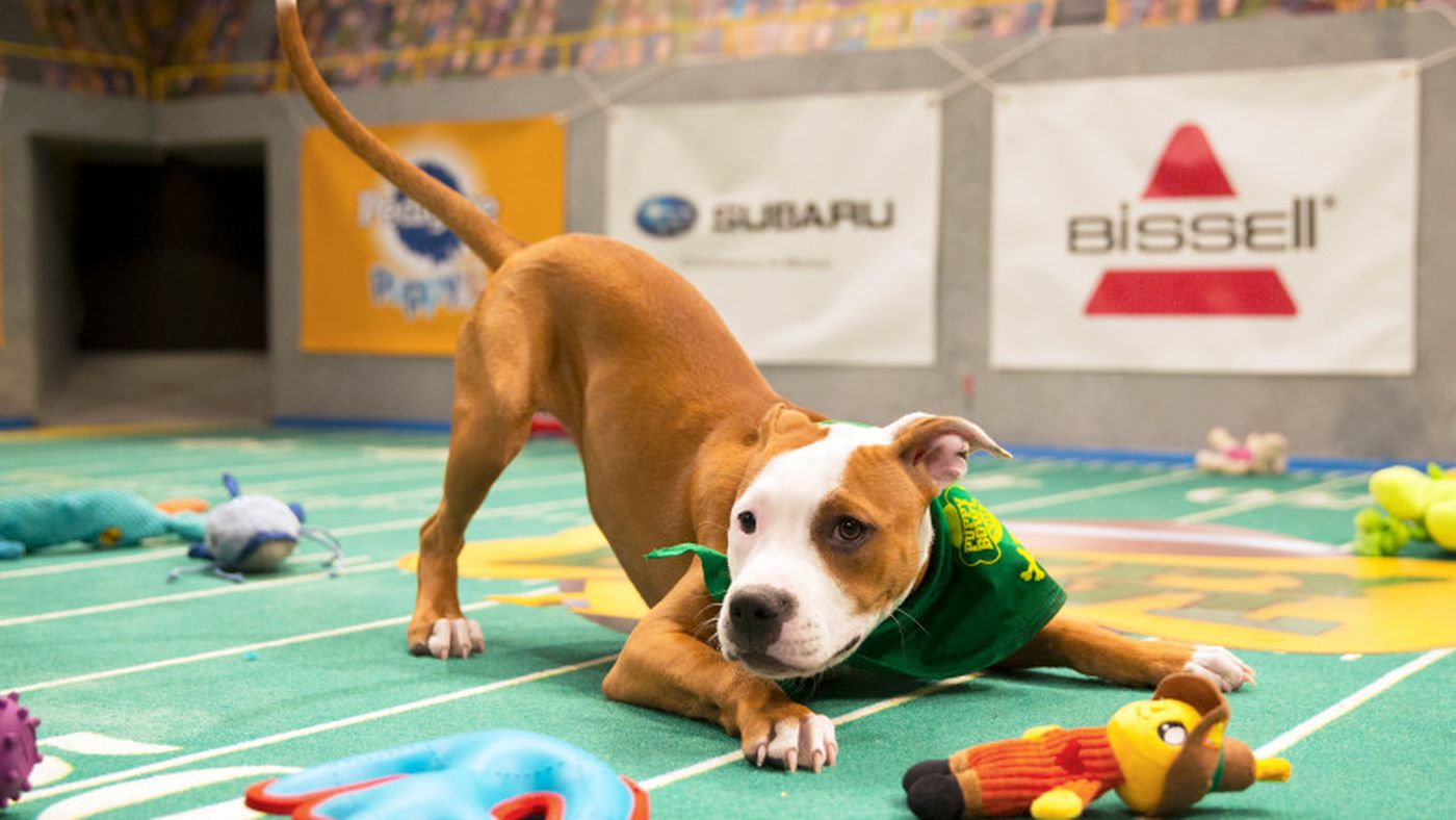 The Puppy Bowl, explained - Vox