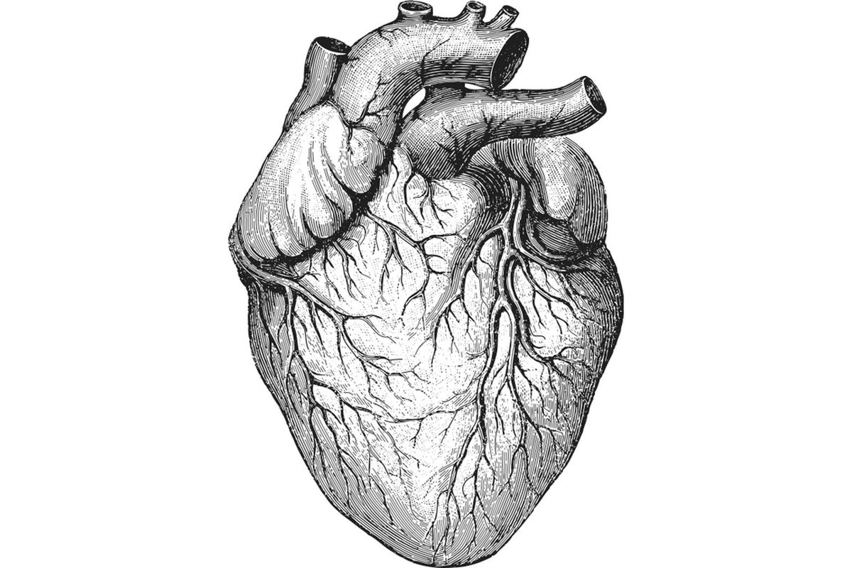 creating the first lab-made human heart