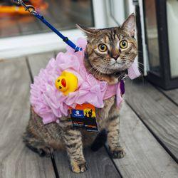 "Top Paw Pet Halloween Loofa Rider Costume, <a href=""http://www.petsmart.com/featured-shops/costumes/top-paw-trade-pet-halloween-loofa-rider-costume-zid36-5236684/cat-36-catid-800791?_t=pfm%3Dcategory"">$10.49</a>"