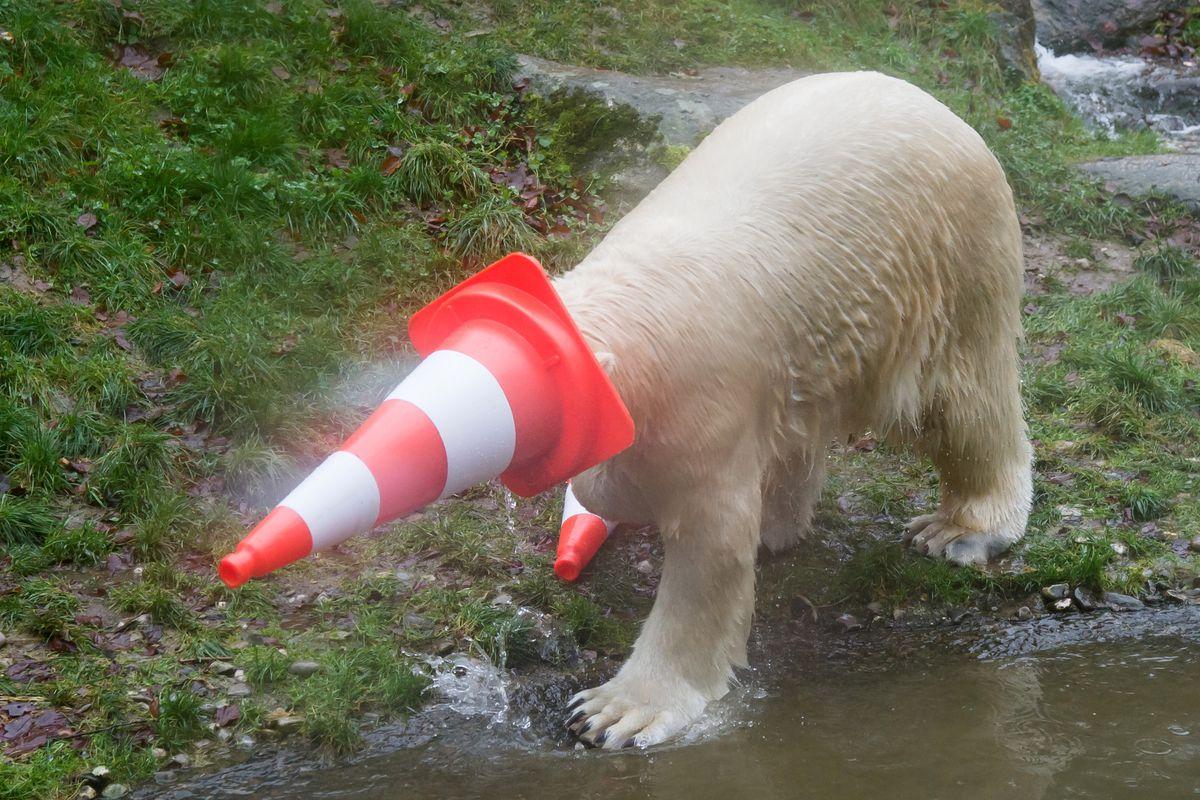 Polar Bear Twins Celebrate Second Birthday