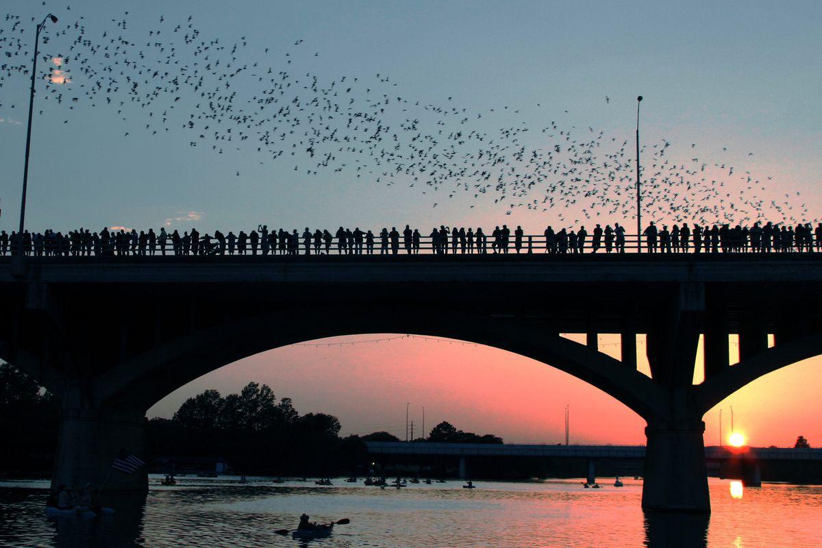Watching the bats at the Congress Avenue Bridge