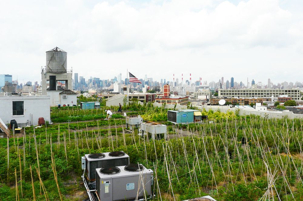 Rooftop Farm Designer Gwen Schantz Wants To Cover New York