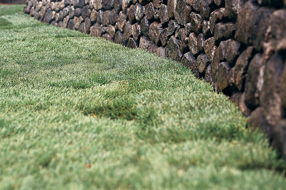 How To Sod A New Lawn This Old House